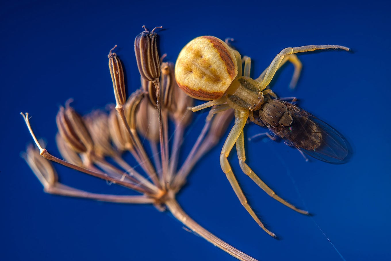 javier-aznar-sony-alpha-7RIII-extreme-close-up-of-spider-on-plant