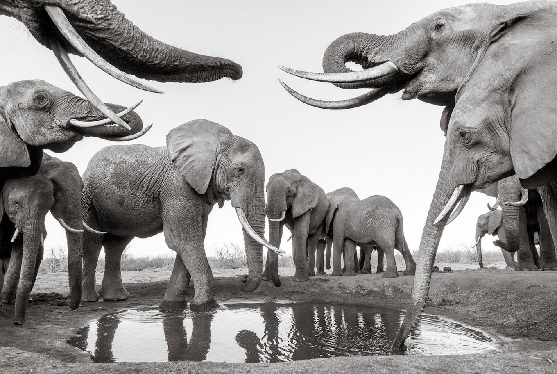 Will Burrard-Lucas - Intohimoinen villieläinkuvaaja | Sony FI