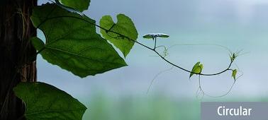 Kuva köynnöskasveista