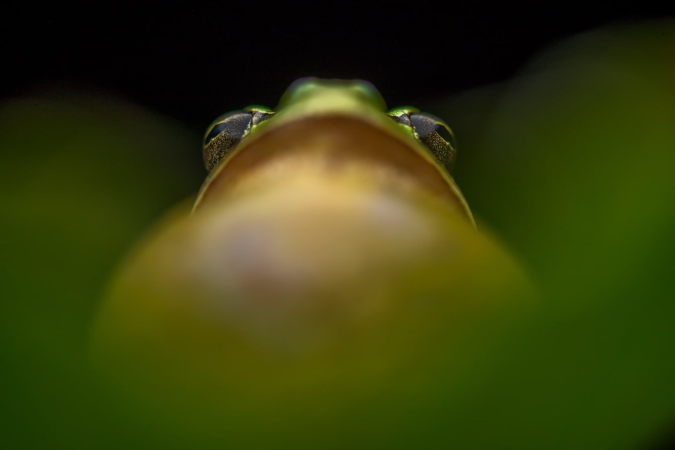 javier-aznar-sony-alpha-7RIII-extreme-close-up-of-frog